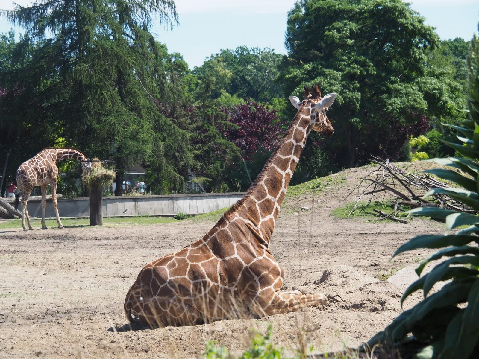 Zoo Wrocław zwiedzanie