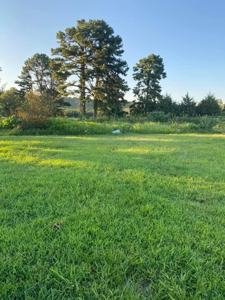 Greenhouse site grass