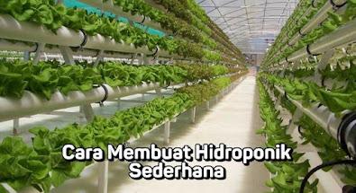 hidroponik botol cara membuat hidroponik hidroponik paralon hidroponik kangkung tanaman hidroponik rumahan nutrisi hidroponik hidroponik sederhana untuk pemula