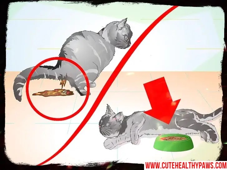 Cat After Neutering or Spaying