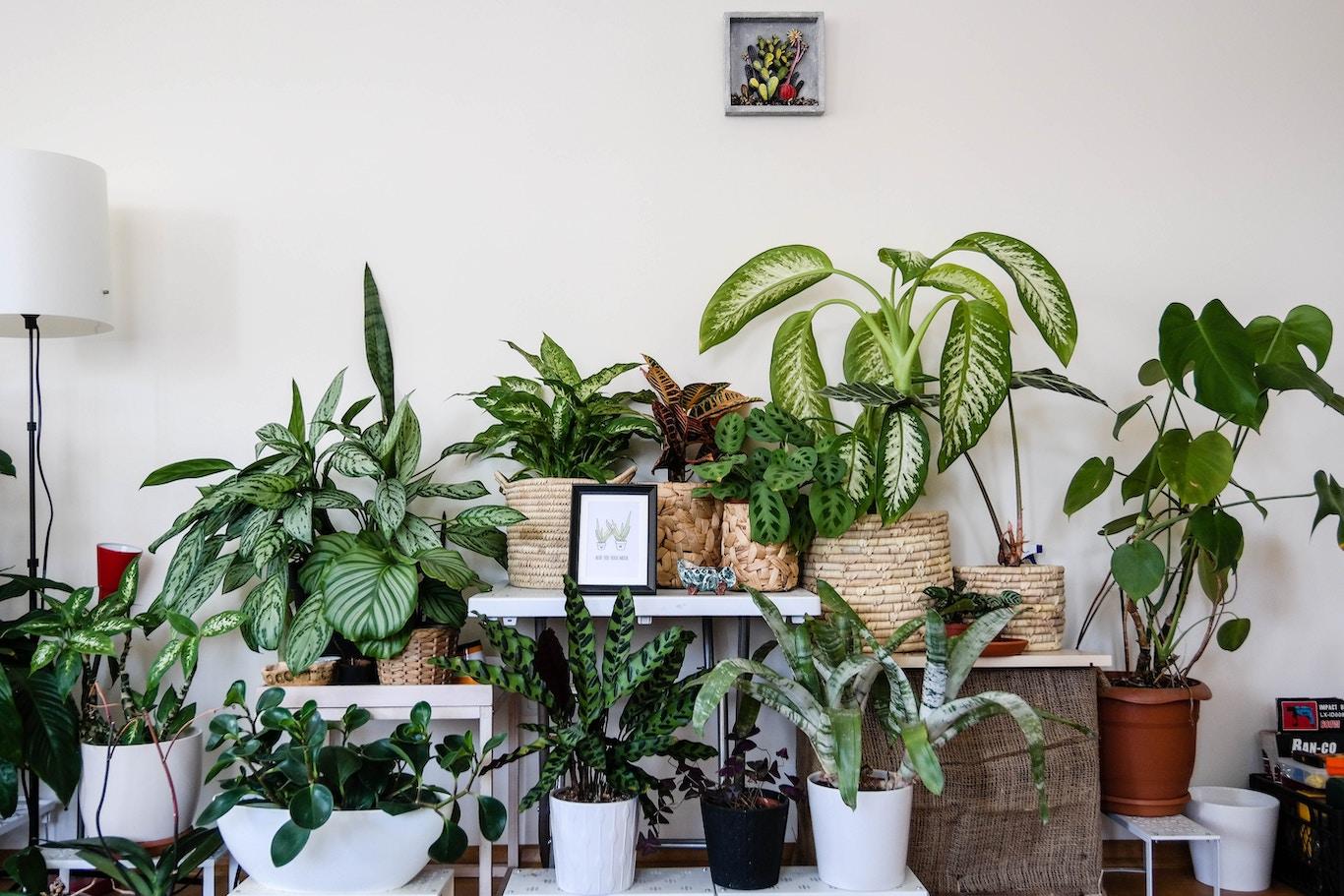 Plantas de interior que refrescan el ambiente