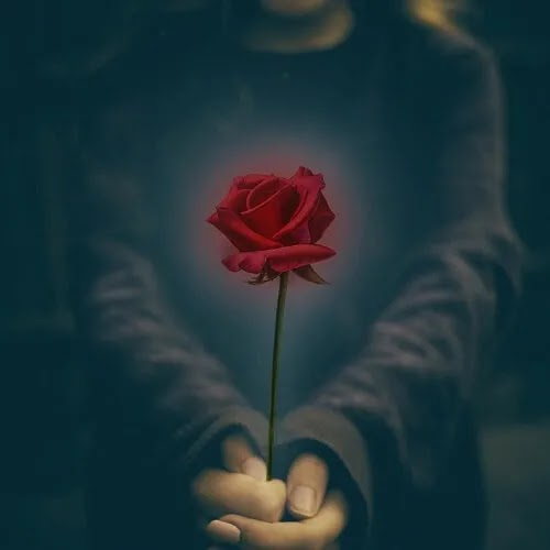 boy with red rose in hands DP for boys