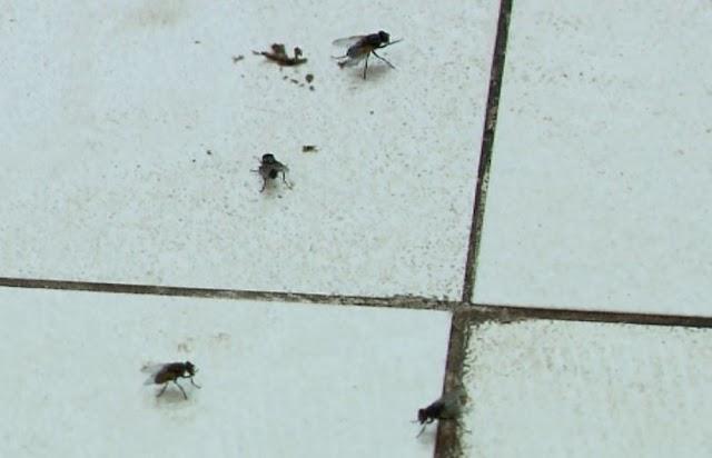 Ceará já registra mais de 32 mil casos de virose da mosca só neste ano