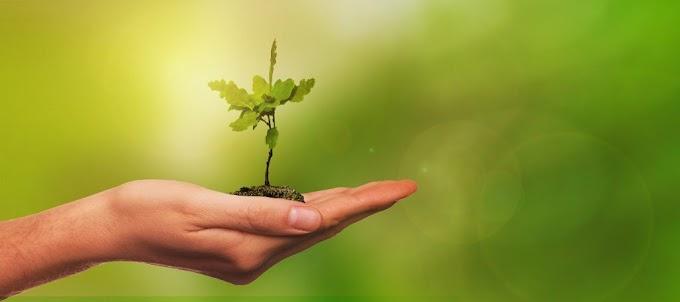 Entorno DF: Preservação do meio ambiente também é uma prioridade para a gestão Hildo do Candango