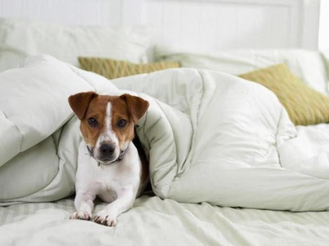 Nuôi chó có thể mang lại mầm bệnh cho con người
