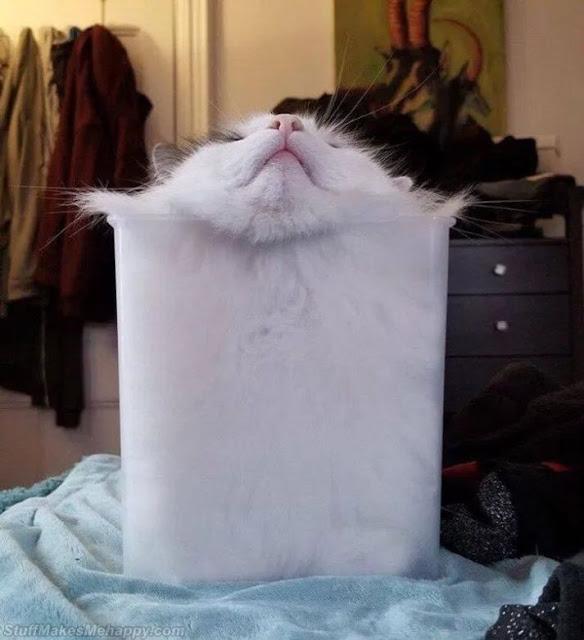 2. Say hello to Dixie, the liquid cat.