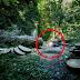 HR News -  TKI Malaysia Asal Ponorogo Meninggal Dunia Karena Tertimpa Pohon Saat Bekerja