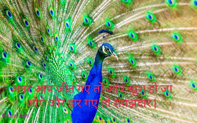 Good Morning Peacock Images