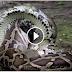 เมื่อนักล่า กับ นักล่า มาเจอกัน งู กับ จระเข้ ใครจะพลาดท่า...เสียทีก่อน....