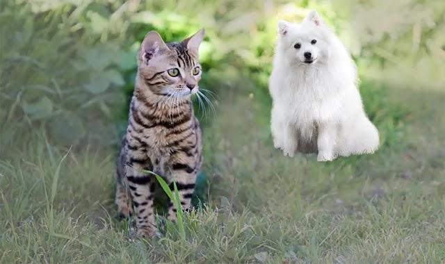 Mon Chat Du bengal Peut-Il Vivre Avec Un Chien