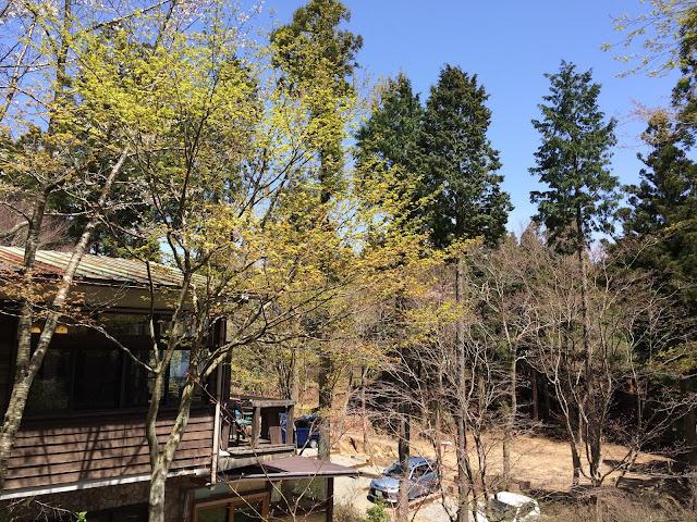 イメージ画像:森の中
