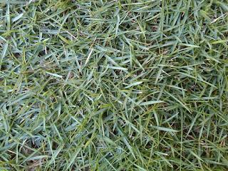 Jual Rumput Jepang Murah di Tangerang,Jual Rumput Peking Murah di Tangerang,Jasa Tukang Taman