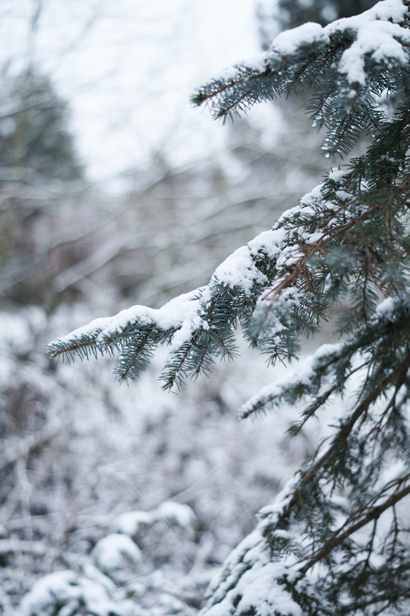 Blog + Fotografie by it's me! - Draussen - Frau Frieda sucht Schnee, Tanne mit Schnee