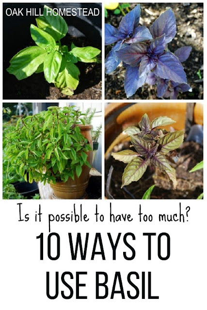 Ten ways to use basil, because you can never have too much!