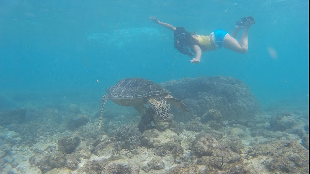 The Great Apo Island Experience