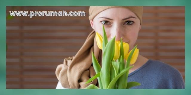 manfaat tanaman cincau - mencegah kanker