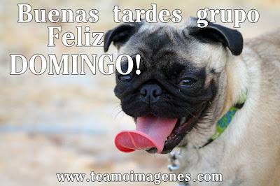 7 imágenes de feliz domingo GRUPO