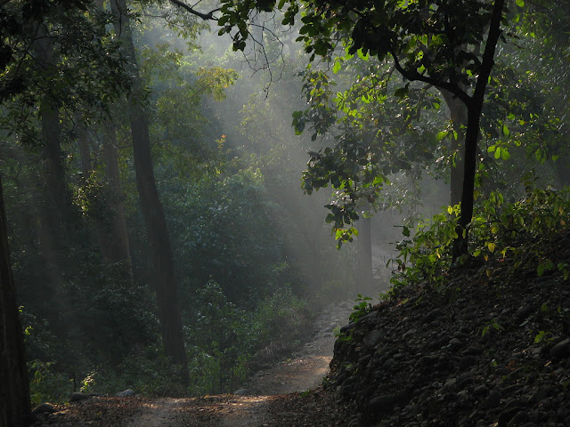 ढिकाला कॉर्बेट नेशनल पार्क