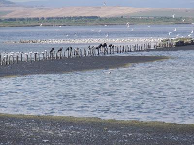 Поморийское озеро, охрана природы