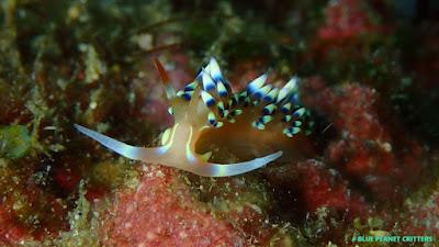 Underwater photography 水攝 Macro 微距 Scuba dive 潛水 TG4 Anilao 阿妮洛 tulamben 土蘭奔