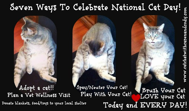 Cat Chat With Caren And Cody 7 Ways To Celebrate National Cat Day