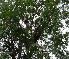 विधानसभा के बाहर पेड़ पर चढ़ा युवक, पुलिस ने क्रेन की मदद से उतारा