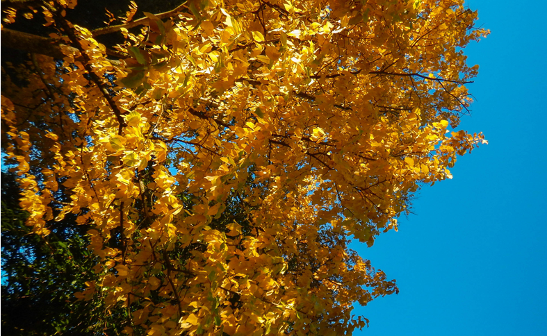 Places to Experience Melbourne's Autumn 2015