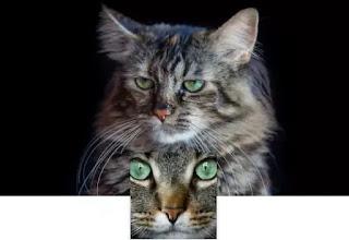 sfondo gatti