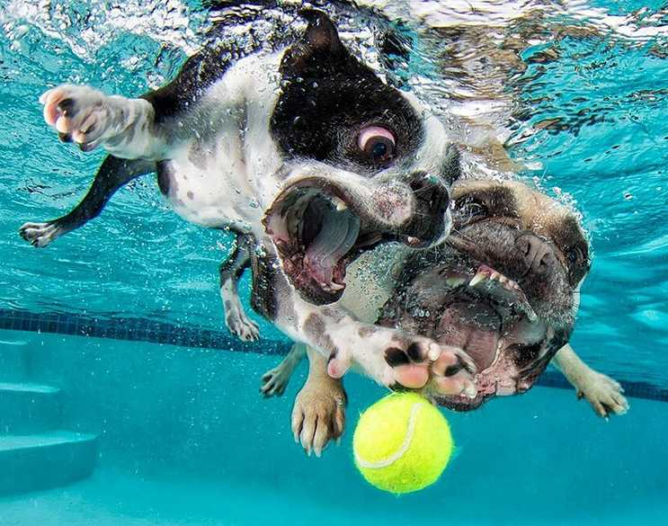 Swimming dogs