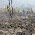 Más de 1,500 tareas de bosque afectado por fuego en loma Guaiguí, La Vega