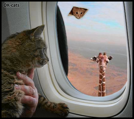 Photoshopped Cat picture • Weirdest plane trip! Mesmerized cat sees a giraffe and ceiling cat through the airplane window!