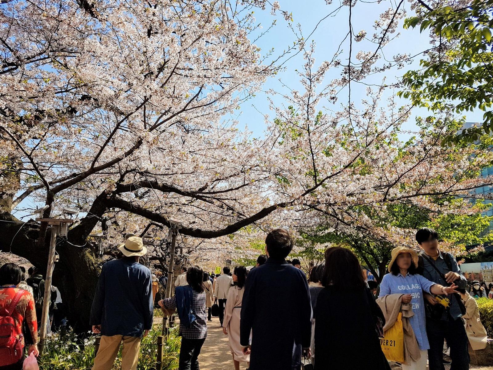 千鳥淵櫻花季,櫻花下都是人呢