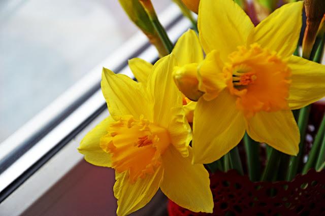 kwiaty, kwiaty cięte, kwiatki wiosny, żółte kwiatki