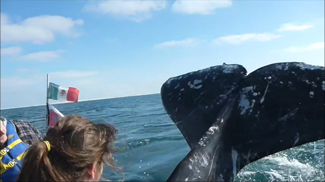 girl slapped in the face with a whale tail