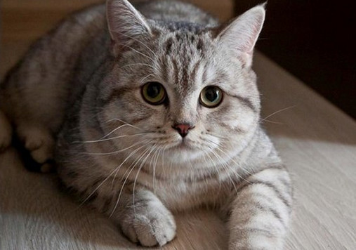 Image result for arti mimpi kucing