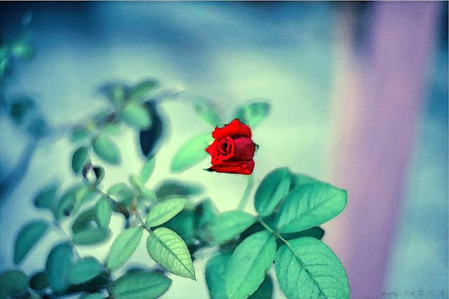 ေမာင္ေမာင္စုိး ● ႏွင္းဆီနီနီ အိပ္မက္မ်ား – အပိုင္း (၁၈)