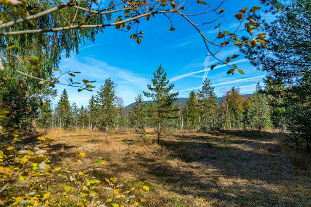 Talwanderung Inzell | Herbstwandern im Chiemgau | Moor-Erlebnis-Pfad und Reifenrutsche Kesselalm 04