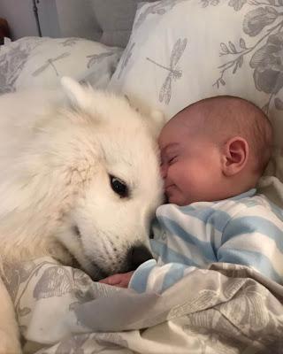things dogs love pomeranian labrador doberman border collie puppy  cane corso