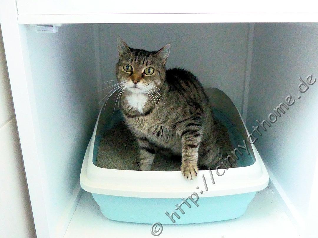 Cinny@Home: Ein Schrank um das Katzenklo sauber zu verstecken ...