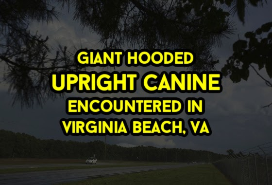 Giant Hooded Upright Canine Encountered in Virginia Beach, VA