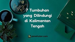 7 Tumbuhan yang Dilindungi di Kalimantan Tengah