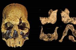 Ciri-Ciri Manusia Purba Homo Rudolfensis