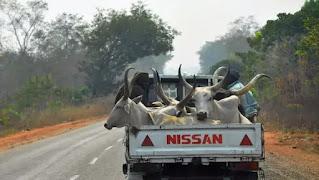 Sallah: Groups Donate Cows, 50 Goats To IDPs, Widows
