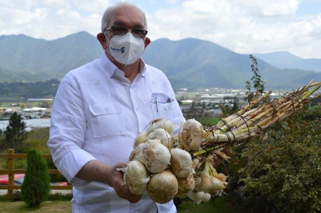 Gobierno asegura recuperó la siembra de ajo en Constanza
