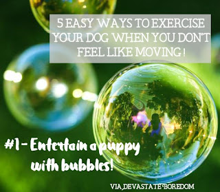 I wish I had known these when Kaylee was a puppy!  SO smart, and easy.  #1 - Entertain a puppy with bubbles! - 5 simple, minimal-effort ways to exercise your dogs when It's raining, hot out, or you're sick / pregnant / just freaking tired!  How to entertain a puppy without exhausting yourself in the process...