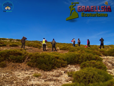Cabra Montés de la Sierra de Guadarrama