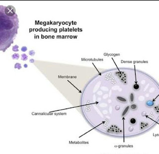 Diagram of platelets structure
