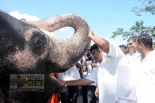 sajith premadasa kiss elephant