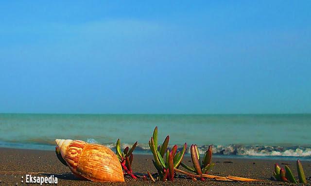 Pantai Muara Kencan Yang Sepi