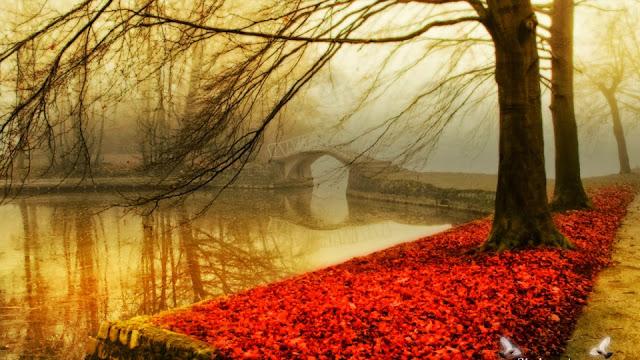Afbeelding met rode herfstbladeren naast het water